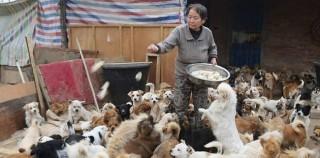 Чуваат повеќе од 1000 кучиња од хумани причини