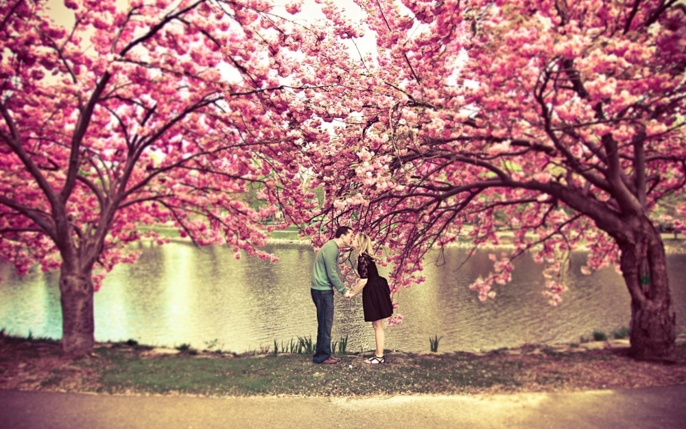 14253160-R3L8T8D-1000-4379105-R3L8T8D-1000-sakura-tree-flower-spring-pond-couple-kiss-love-nature