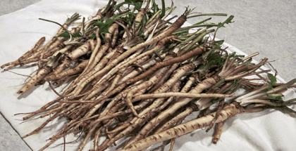 Dandelion-Root-is-100X-More-Effective-Than-Chemotherapy