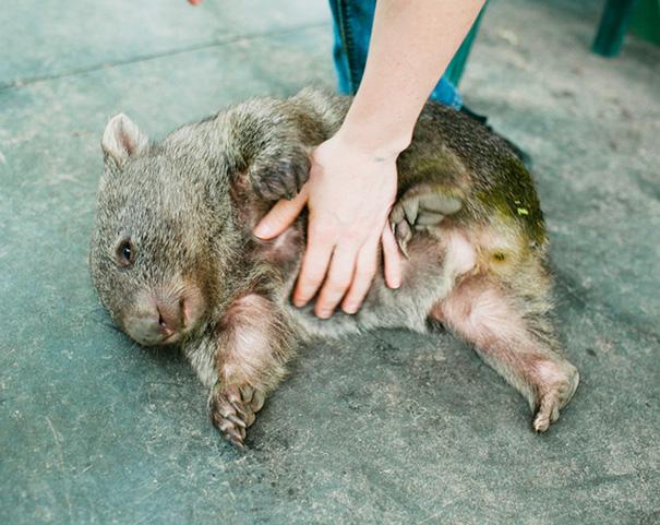 belly-rub-animals-46__605
