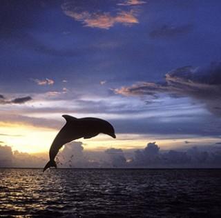 Видени во ново светло: Фотографи низ светот сликаат силуети на животни на сензационално небо